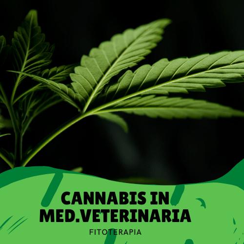 Cannabis in medicina veterinaria