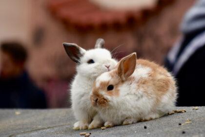 Coniglietti
