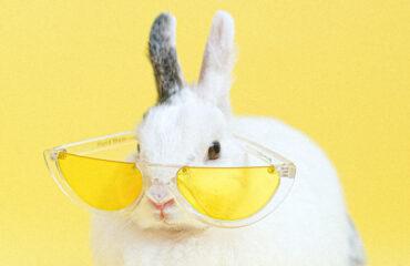 Coniglio con occhiali da sole