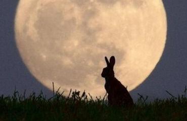 Il coniglio e la luna