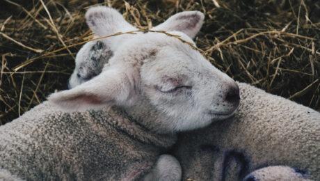 sonno animali