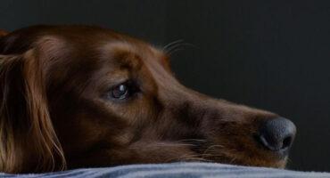 Il ruolo del veterinario nella prevenzione della violenza