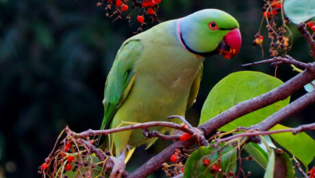 I pappagalli e lo spreco