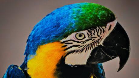 I colori dei pappagalli