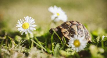Animali e fiori