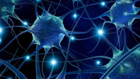 Pruning neuronale