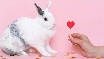 Come comunicano i conigli